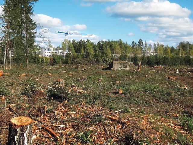 avocado e deforestazione