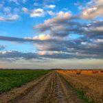 Agricoltura biologica e biodinamica: cosa sono e in cosa differiscono