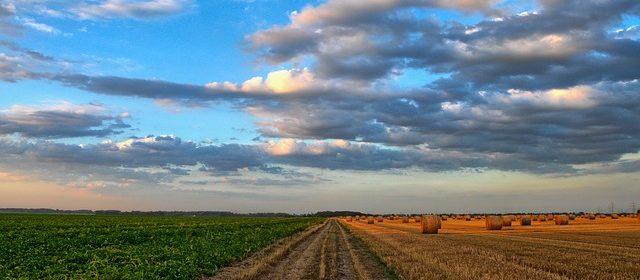 agricoltura biologica e agricoltura biodinamica