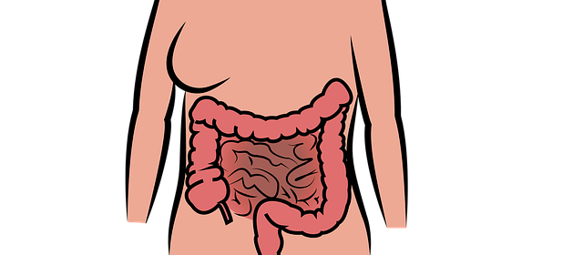 sclerosi multipla e intestino