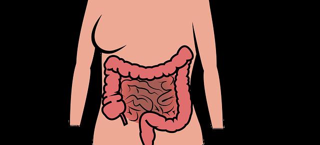 sclerosi multipla e intestino