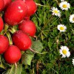 Detox stagionale: cosa mangiare per depurare e rinnovare l'organismo