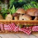 Funghi ripieni alla Mediterranea: diamo il benvenuto all'Autunno