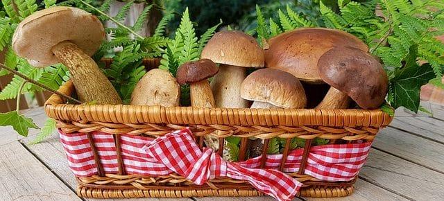 Funghi Ripieni alla mediterranea